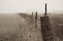 Fence Row (ramseybuckeye) Tags: fence row putnam county ohio rain rainy fog foggy day pentax art wheat corner post