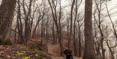 Cortana - Hiking (Tony Webster) Tags: frontenac frontenacstatepark lakepepin minnesota mississippiriver earlyspring forest leaves spring statepark trees unitedstates us