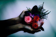 Perfume https://500px.com/photo/205633079 (KT.pics) Tags: 500px fine art flower flowers koukichi takahashi ktpics hand cinematic dramatic dark darkness plant plants nature atmosphere mood moody ominous mysterious perfume horror enigma silence arm body parts weird unnerving eerie sinister bewitched