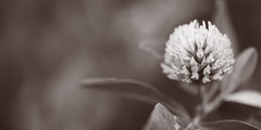 "Flower ""Explored"" (leon_1970) Tags: flowers flower spring nikon explore duotone d800 105mmf28 105macro explored 2013 nikonista infinestyle spring2013 maggio2013 explore19maggio2013"