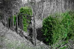 Garten (Robert Sitko) Tags: white black garden 50mm prime nikon colorful nikkor garten schwarz farben d800 weis festbrennweite