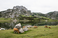 Lake Ercina, Picos de Europa, Spain. (Flash Parker) Tags: travel mountains tourism trekking landscape outdoors cuisine spain nikon cows flash culture tourist hills adventure spanish tapas nikkor 2012 iberia d800 picosdeeuropa flashparker spain6062