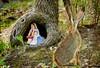 What Are You Doing Here? (Muffet) Tags: tree rabbit mushroom girl alice fantasy imagination root wonderland aliceinwonderland