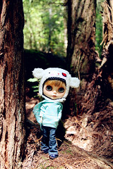 Rockie in the woods