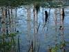 IMG_0526 (Dan Correia) Tags: amherst swamp reflection 15fav topv111 topv333