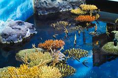 Coral 3 (valyxxx) Tags: fish coral penguin shark nemo lisbon clown frog dory oceanarium