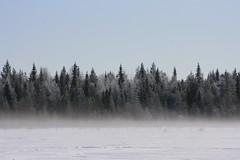 amazing treeline (karinselten) Tags: winter mist snow cold nature fog finland landscape sneeuw bos landschap kou pyha