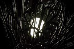 lampadaire DIONAEA d'Enfaz pour le Re-Design Boxon.