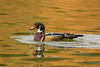 Bath Time (Amy Hudechek Photography) Tags: california autumn lake duck bath sandiego splash woodduck santeelakes happyphotographer mygearandme mygearandmepremium amyhudechek