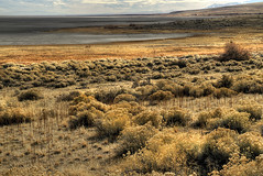 Mud Flats and Sage (arbyreed) Tags: mud sage antelopeisland mudflats rabbitbrush greatsaltlakeutah arbyreed