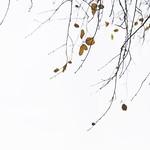 London 3.[33] - leaves thumbnail