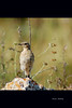 pájaro (vitofonte) Tags: naturaleza bird nature natureza natura pájaro vitofonte vigilantphotographersunite vpu2 vpu3 vpu4 vpu5 vpu6 vpu7 vpu8 vpu9 vpu10