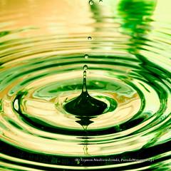 IMG_1457.jpg (Szymon Niedwiedziski) Tags: macro water drops waterdrops makro szymon woda krople kropla kroplewody niedwiedziski paradawspomnie paradawspomnien