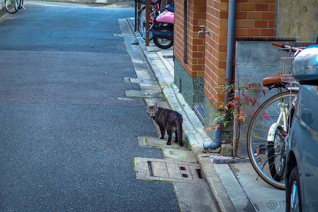 Today's Cat@2014-01ー03