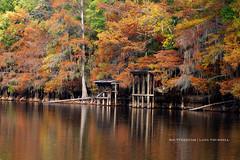 Golden Cypress (ShutterByMe) Tags: autumn fall river boat moss dock texas fallcolors tx foliage bayou swamp spanishmoss cypresstrees caddolake boatdock bigcypressbayou karnacktexas