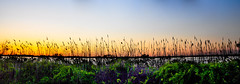 Panoramic View (Arif_Mahmood) Tags: nyc sunset summer sky ny flower tree green water leaves lights leaf pano panoramic longisland queens