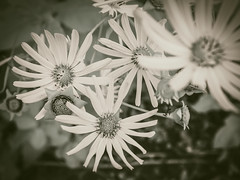Look straight down (bill.d) Tags: flower us michigan unitedstatesofamerica overcast lunchhour lunchtime kalamazoo noon wmu redfilter westernmichiganuniversity kalamazoocounty oshtemo 590n
