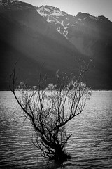 South Island Tour, New Zealand (Greg Clay) Tags: newzealand bw tree canterbury nz otago 6d glenorchy