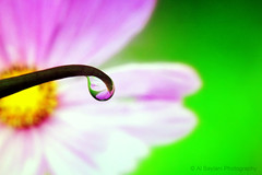 droplet refraction (uvaisjm - Al Seylani Photography) Tags: