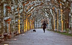 Frankfurt treeway (Alex Tudorica) Tags: dog germany walk frankfurt treeway fleursetpaysages outstandingromanianphotographers