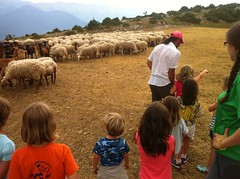 Campamentos de Verano Pyrene_Camp Minairons (Club Pyrene) Tags: summercamp granja aventura lacerdanya pirineu pyrene campamentos sostenible coloniesestiu