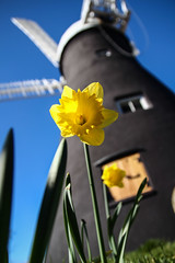 Holgate Windmill, March 2014 (2)