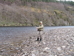 If any one is going to take a fish when the going is a bit difficult, it will be Lawrence Hoskins who has fished the Oykel for decades.  Knowing the river intimately gives an angler of his experinece a great advantage.