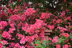 (youngchen) Tags: flowers nikon taiwan