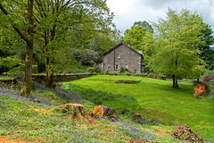 Grasmere Cottage (Paul Hayman) Tags: trees colour bluebells garden landscape spring scenery village view hiking district grasmere cottage lawn lakes lakedistrict foliage cumbria wordsworth