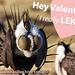 Happy Valentine's Day! Greater Sage-Grouse Valentine