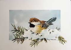 """""""Boreal Chickadee"""" Line and wash Watercolor. New YouTube Video. (Peter Sheeler) Tags: video youtube youtubers landscape art original watercolor winsorandnewton watercolour painting paintingaday penandink architecture ink moleskine canada waterbrush arches lamy uniball higgins fountain soluble chickadee wildlife bird"""