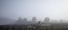 Nabout (Pierre NATOLI) Tags: fog grenache mourvèdre armand parcelle quernes masdesquernes terrassesdularzac languedoc larzac brouillard brume querne villaromaine lavillaromaine bio biologique vin blaireau