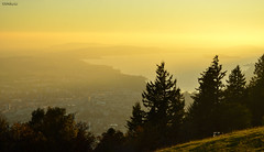 Golden hour (clasch) Tags: biel bienne lake lac see bielersee golden hour switzerland suisse schweiz landscape view nikon d7000 nikkor 1224 bözingenberg montagne boujean