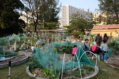 Our city farm. (Dallas K. Sanders) Tags: 2017 farm farming hongkong kowloonbay urbanoasis