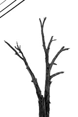 A reminder - (deanrr) Tags: napg spring 2017 wires cullmanalabama alabama cullmancountyalabama nature minimalism blackandwhite silhouette