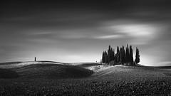Isolation II (oscar lsz) Tags: noir monochrome tuscany cypresses italy blackandwhite tree dark
