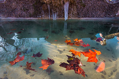 Floating leaves (luigig75) Tags: leaves winter water cold 70d efs1022mmf3545usm