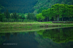 Relection (MIYAMOTO824) Tags: sunset reflection tree japan woods niigata ricefield 2013