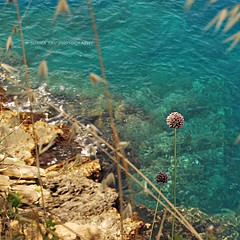 On the Edge (SiminaSav) Tags: blue sea italy liguria terre cinque