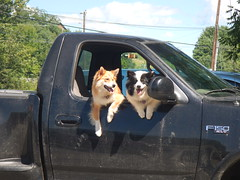 Waiting in the truck (LisaNH) Tags: