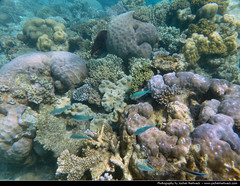 Great Barrier Reef, Australia (JH_1982) Tags: world ocean fish heritage nature coral landscape grande site underwater pacific great australia unescoworldheritagesite unesco qld queensland gran barrier australien cairns reef corals australie barrera  barrire  corail barriera corallina