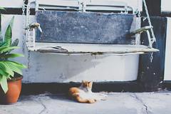 Sleepyhead (nosypirate) Tags: cat 50mm sleepy