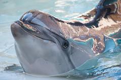 Echo (Jennifer Stuber) Tags: show dolphin dolphins marineland bottlenosedolphin kwt bottlenosedolphins marinelandcanada kingwaldorfstadium kingwaldorftheatre