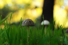 Fungi (Cristina Mateos) Tags: park parque naturaleza macro nature canon eos fungi hierba