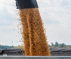 20130920-OC-LSC-1097 (USDAgov) Tags: virginia corn harvest va hanover usda departmentofagriculture feedcorn cornharvester johnnmillssons