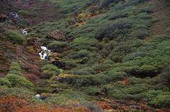 DSC_9215 (pradeep_kumbhashi) Tags: camping mountains nature trekking landscapes paradise glaciers serene kashmir himalaya outofthisworld indiatravel greenary findyourself himalayantrekking warwan warwanvalley