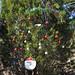 Trees_of_Loop_360_2013_247