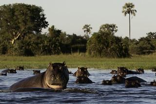 Botswana Okavango Delta Photo Safari 28