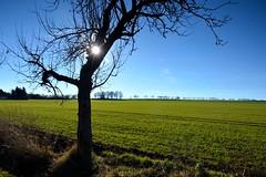 schneeloser Wintertag (superscheeli) Tags: green rain feld wiese himmel grn sonne baum apfelbaum