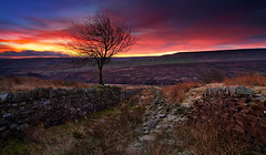 Pre Dawn Tree, Wessenden Moor (Chris Nickerson) Tags: winter tree sunrise landscape dawn peakdistrict yorkshire moor pennine holmemoss saddleworthmoor zeissdistagon21mm